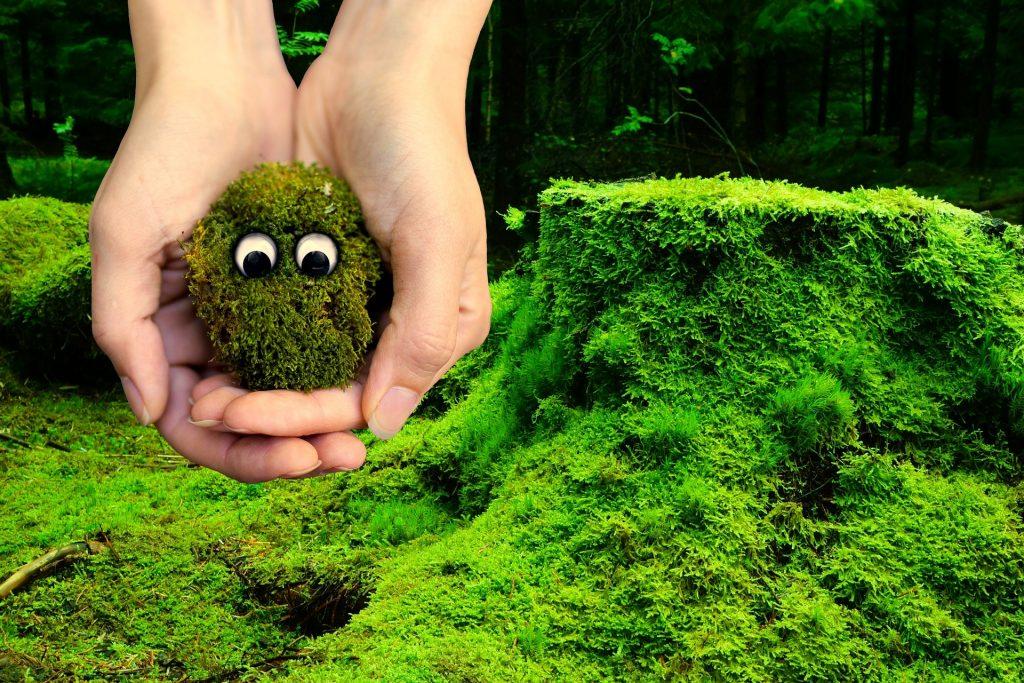 Ökológiai tehetséggondozó műhely - Gyöngyösi Oktatásért és Kultúráért Alapítvány
